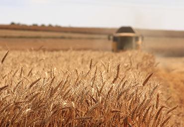 crop-monitoring